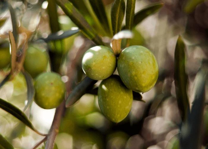 O Olibi é 100% produzido com azeitonas verdes, para garantir um padrão premium de qualidade.